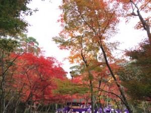 瑞宝時公園