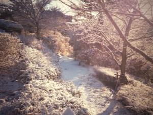 冬の紫陽花小道