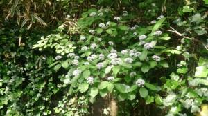 初夏をいろどる♪六甲山の花々