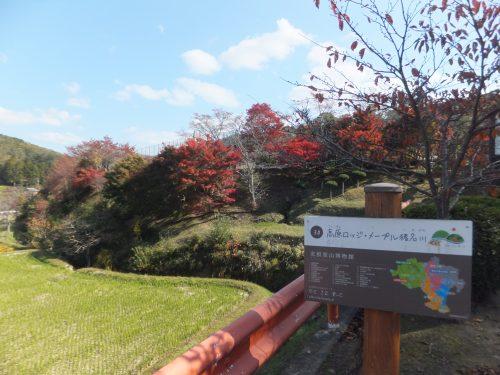 すっかり秋の里山風景です