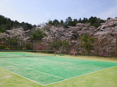 サクラの横でテニス