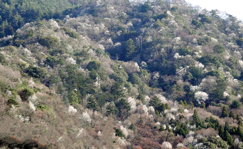 "Scenery of Arima ONSEN ""Mt.IBA"""