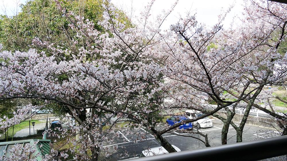 本日のお部屋~桜を眺めながらゆっくりと♪