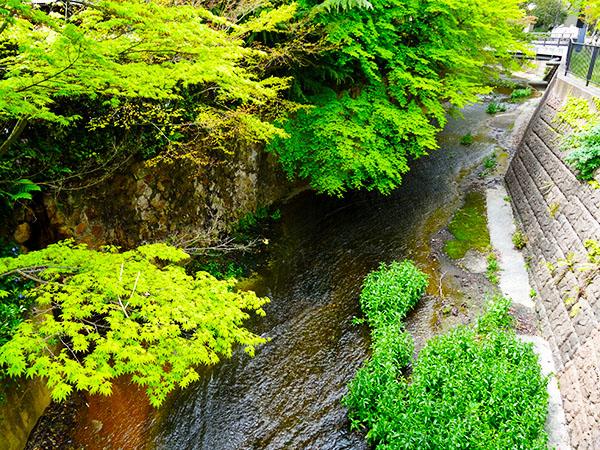 有馬の名所~滝川・新緑